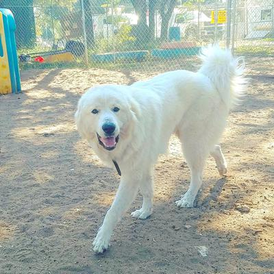 @Zeke_The_Pyr (Follow Him on Instagram!)