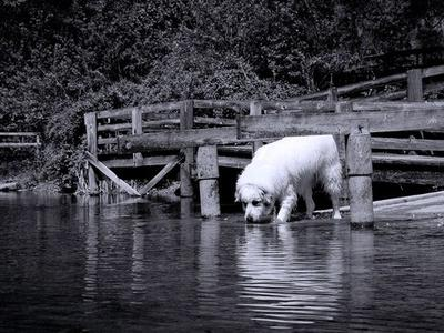Water Pyr