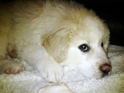 Aslan 8 weeks old