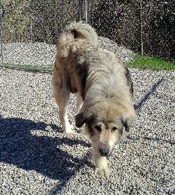 Kitchener Humane Society Dogs For Adoption
