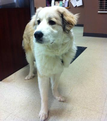 Great Pyr Rescue - Daisy