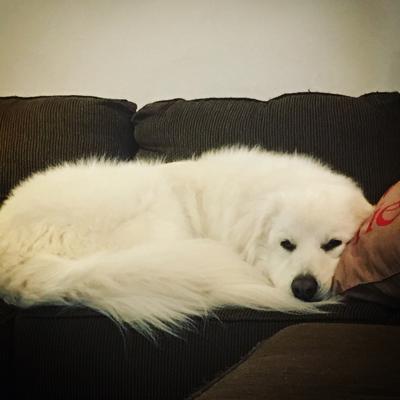 Ghost (half) sleeping.