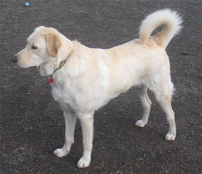 Great Pyr Rescue - Jazmine