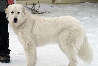Great Pyr Rescue - Kira