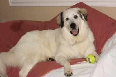 Great Pyr Rescue - Jasper