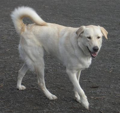 Great Pyr Rescue - Jazz
