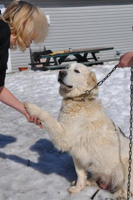 See, she's paw friendly (while holding on to the chain, really!