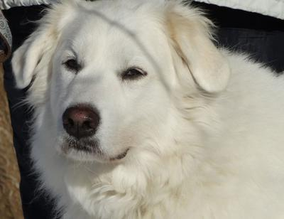 Great Pyr Rescue - Misti Yoda