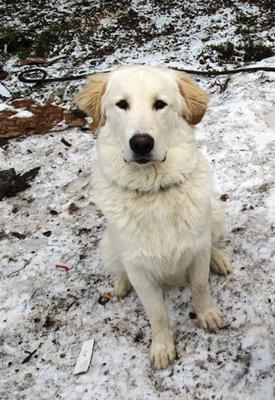 Great Pyr Rescue - Seamus
