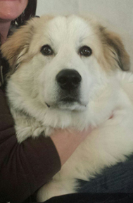 Great Pyr Rescue - Ser Barristan 'Selmy'