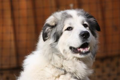 Great Pyr Rescue - Shaman