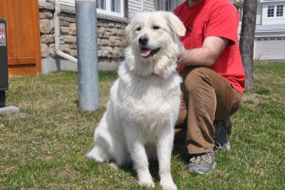 Great Pyrenees Rescue Sophie