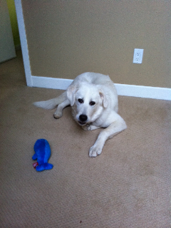 Great Pyrenees Rescue Lexi