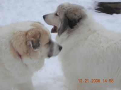 Great Pyrs in New England's snow
