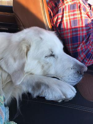 Max in transport to his new home.