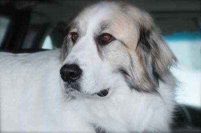 Great Pyr Rescue - Zoe